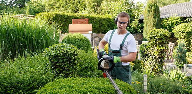 What Are The Basic Gardening Services?